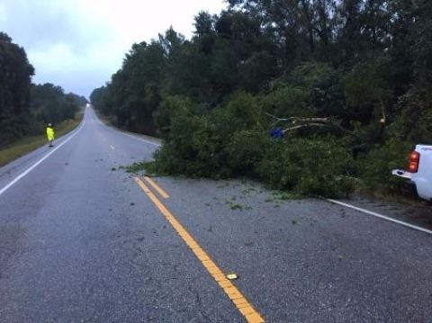 Tree down on Hwy. 167 after Hurricane Irma